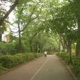 23 南砂緑道公園