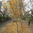10南砂緑道公園7