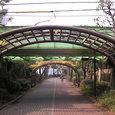 12南砂緑道公園9